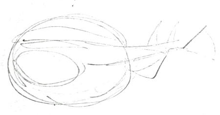 Stingray pencil sketch