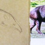 How to draw a tapir tutorial