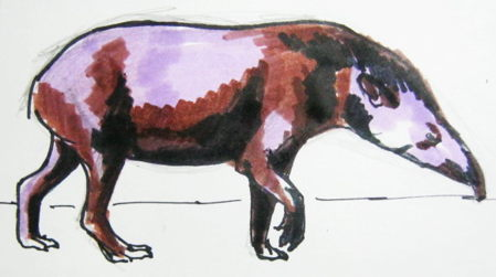 Tapir colored drawing