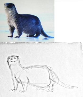 How to draw an otter standing