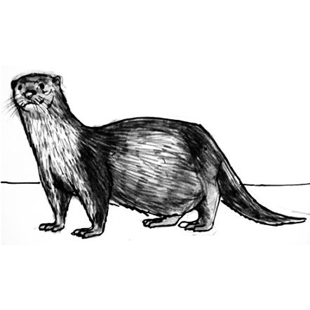 How to draw an otter tutorial