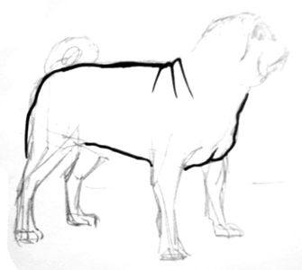 Pug body drawing
