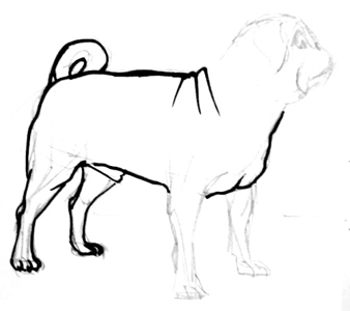 Pug drawing step by step