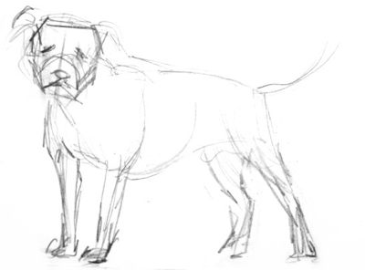 Pit Bull pencil sketch