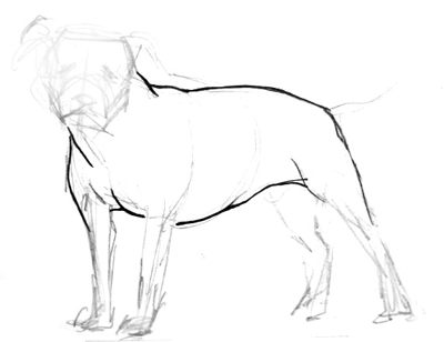 Pitbull body drawing