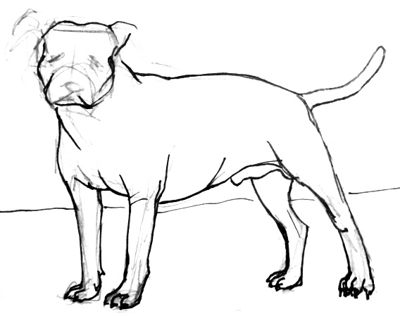 Pit Bull drawing lesson