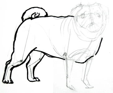 Pug hind legs drawing