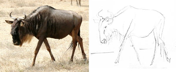 Antelope gnu drawing