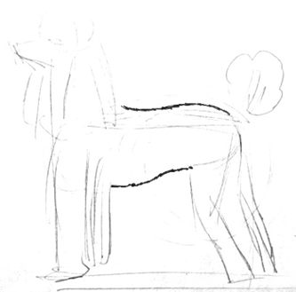 Poodle body drawing