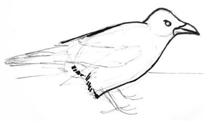 Crow body and head drawing