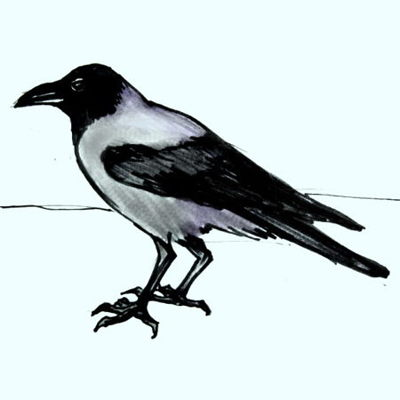 Crow drawing -2