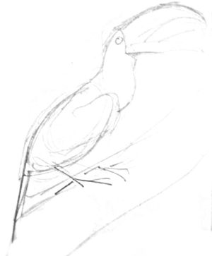 Toucan pencil sketch