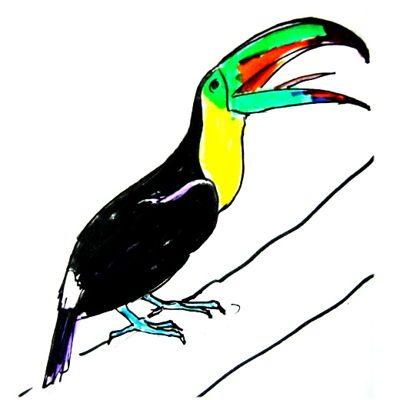 Toucan colored draing.