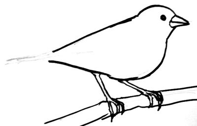 Finch drawing step-by-step
