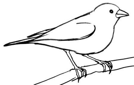 Finch line drawing