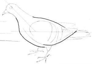 How todraw a pigeon
