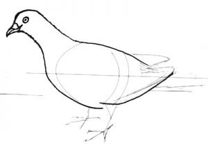 Easy pigeon drawing