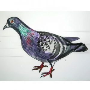 Pigeon colored drawing