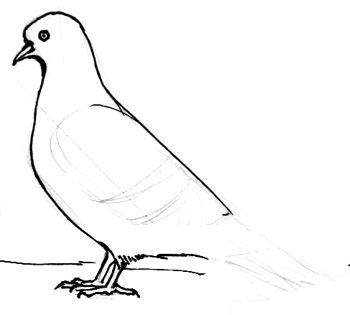 Pigeon drawing step by step