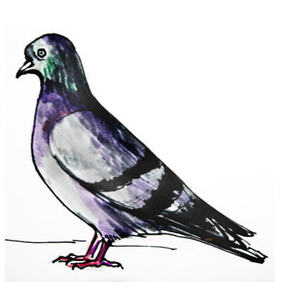 How to draw a Pigeon tutorial