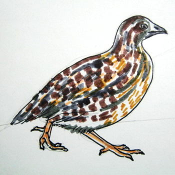 Quail colored drawing