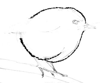 Goldcrest  step by step drawing