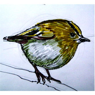 Goldcrest colored drawing