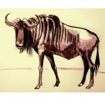 How to draw a Wildbeast (antelope gnu) tutorial