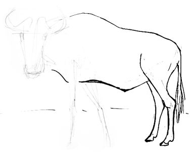 Antelope gnu drawing step by step