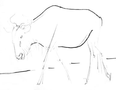 Antelope gnu step by step drawing