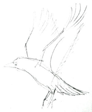 Flying rook pencil sketch