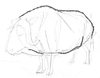 Musk ox drawing step by step