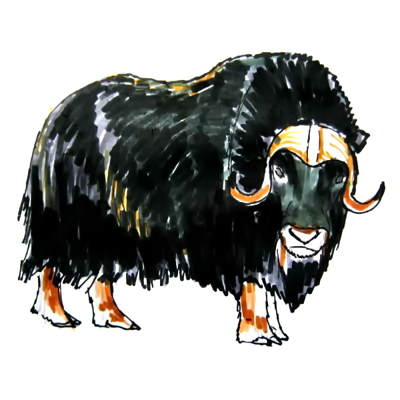 Musk ox colored drawing