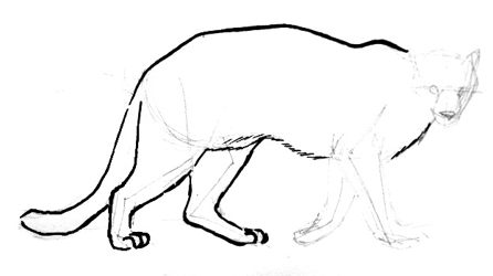 Puma drawing tutorial