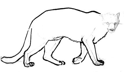 Mountain  lion(puma) drawing lesson