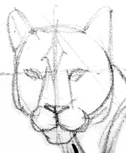 Puma`s face pencil outline