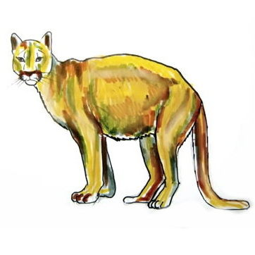 How to draw a puma-cougar-mountain lion