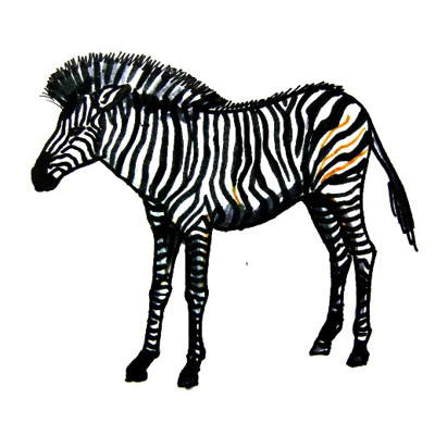 Zebra colored drawing
