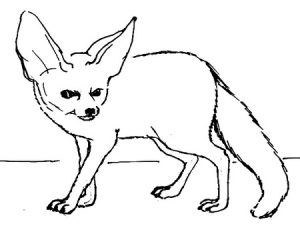 Fennec fox outline