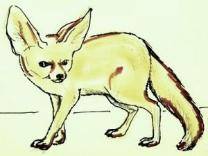 Fennec fox colored drawing