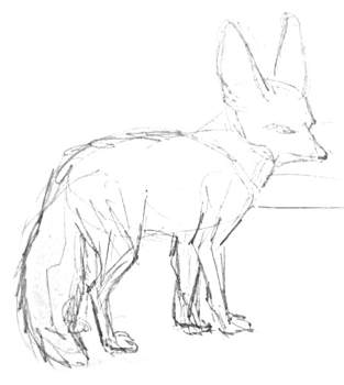 Fennec  pencil outline