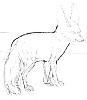 Fennec fox body drawing