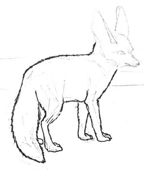 Fennec fox step by step drawing lesson