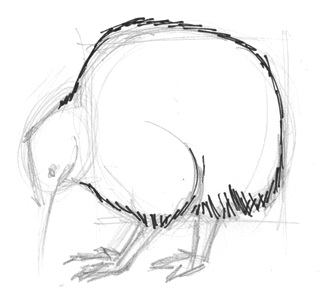 Kiwi drawing tutorial