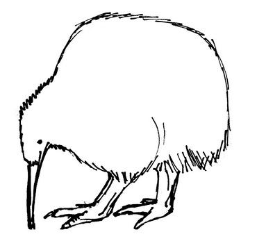Kiwi bird outline
