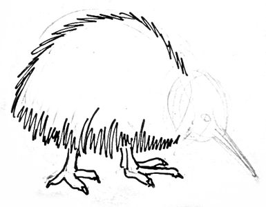 Kiwi bird drawing lesson