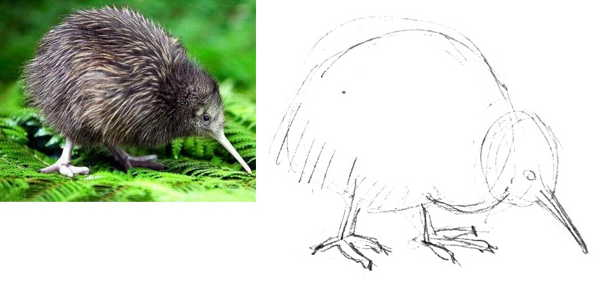 How to draw kiwi