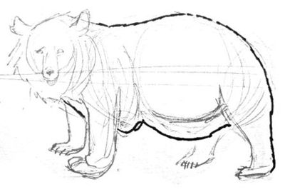 how-to-draw-a-Himalayan-bear-028