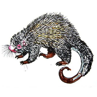 Tree Porcupine colored drawing