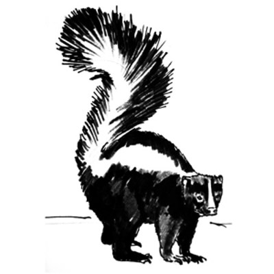 How to draw a Skunk tutorial